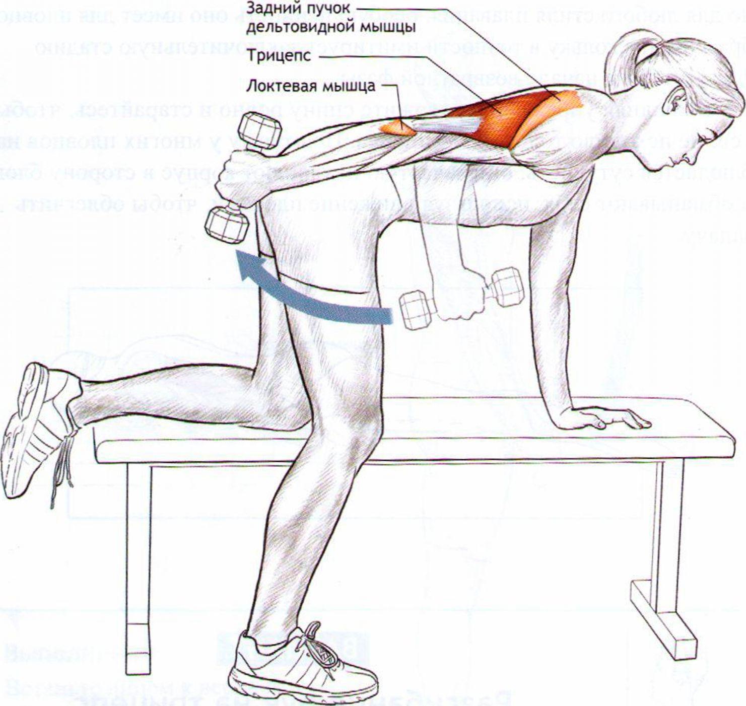 Упражнения для трицепса в домашних условиях со штангой