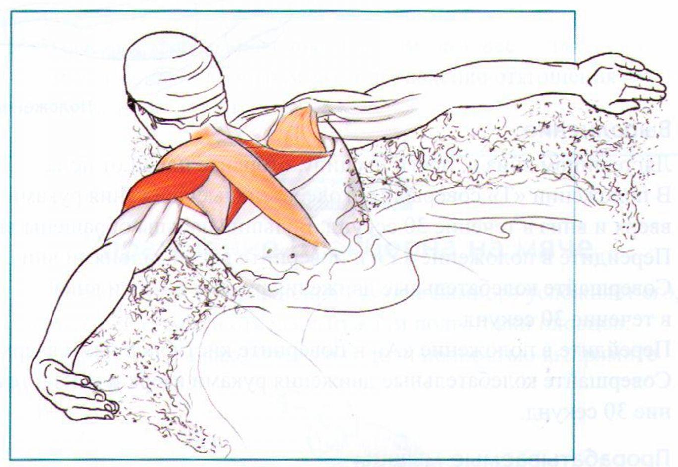 какие мышцы работают при плавании брасом пошлина
