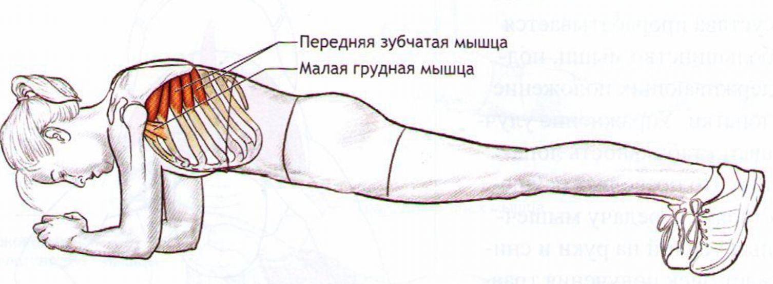 мышцы плечевого пояса постизометрическая релаксация мышц
