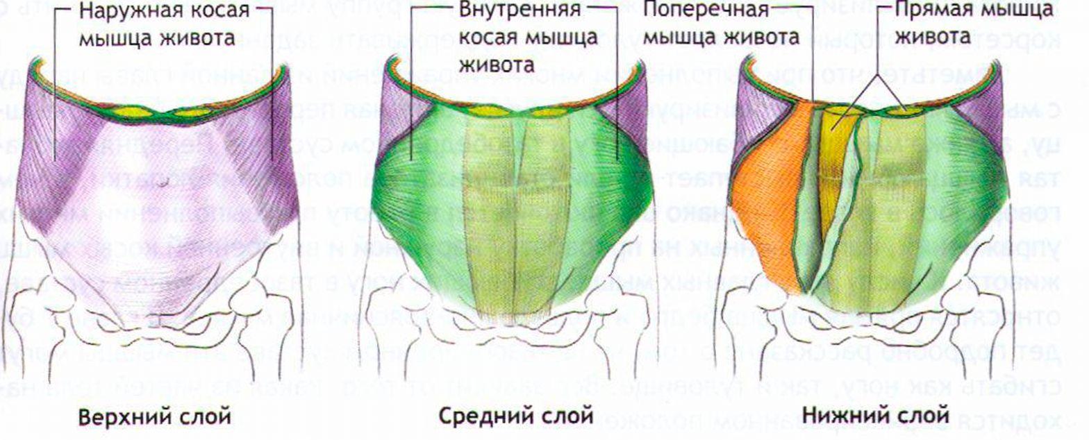 Беременность мальчиком и девочкой: отличия