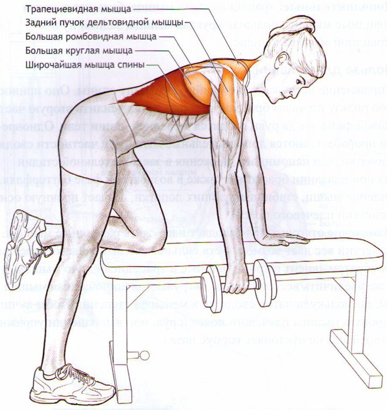 Как расслабить мышцы спины и шеи 46