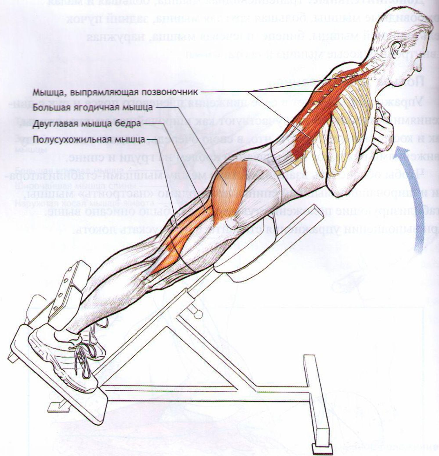 Как расслабить мышцы спины и шеи 93