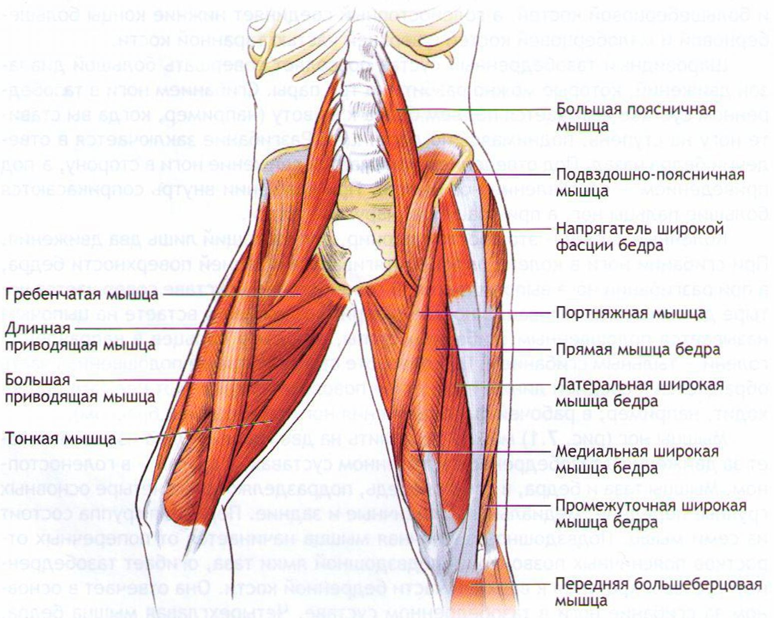 Мышца подъязычноязычная