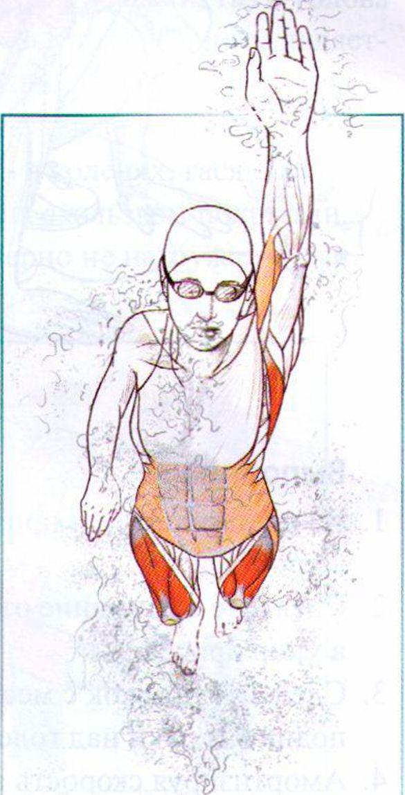 Как накачать мышцы дома подростку как увеличить грудь